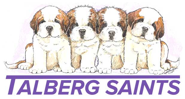 Talberg Saint Bernards